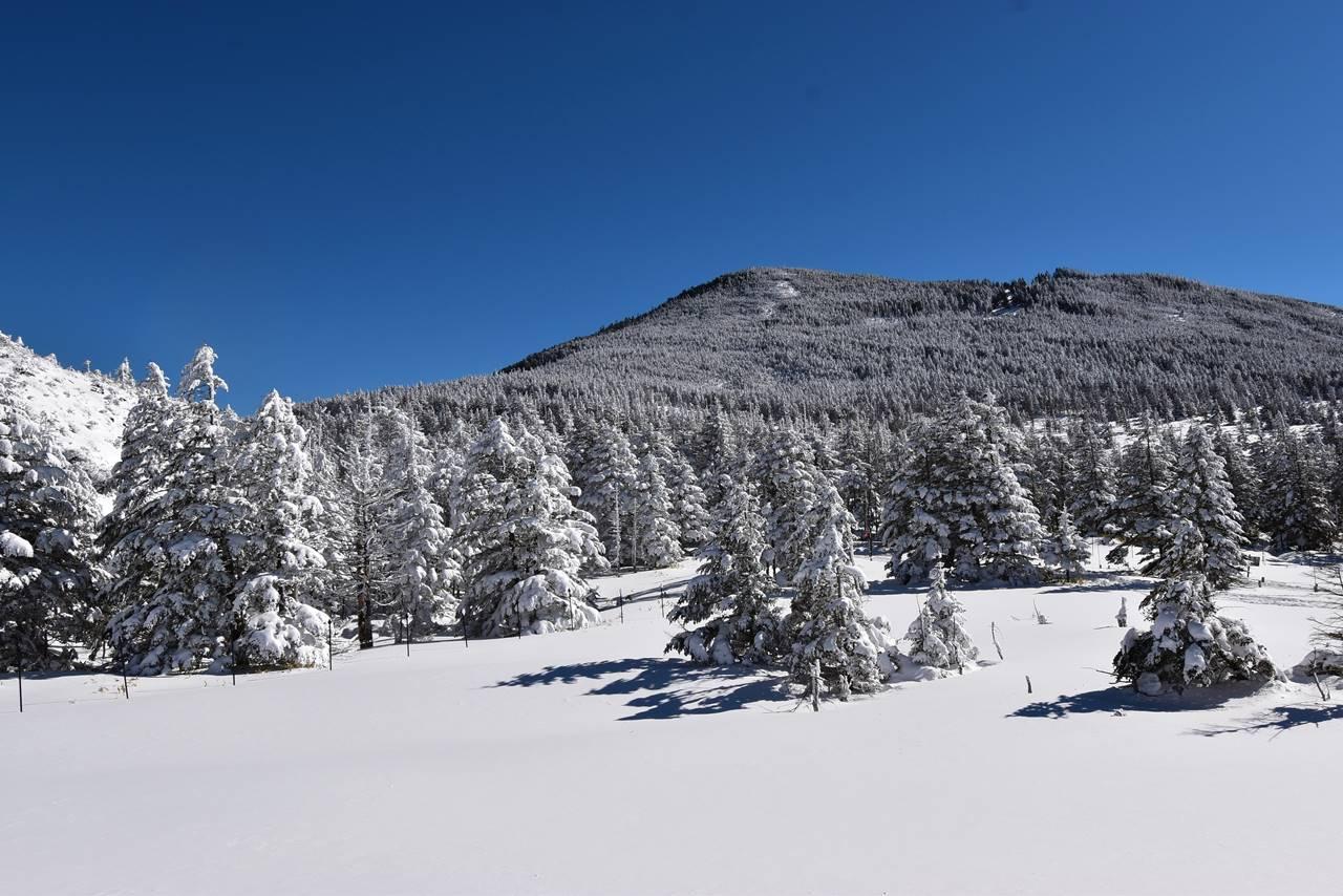 坪庭の雪景色