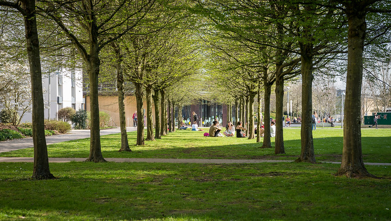 Students sitting under trees in the sun