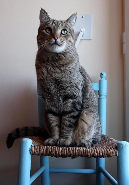 Bandit, gato pardo ojos verdes súper bueno esterilizado, nacido en Marzo´16, en adopción. Valencia. ADOPTADO. 31877249087_03e1957494_z