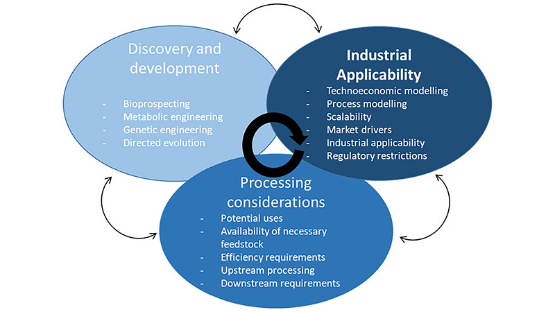 Diagram of the development cycle