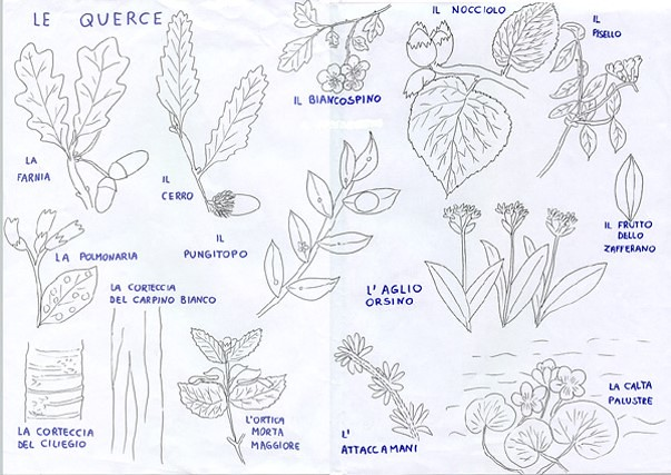 tavola dei vegetali