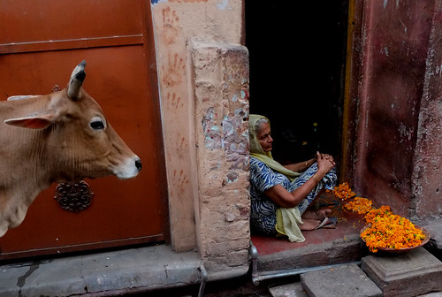 making a living, selling flowers, allahabad, india | by zlight