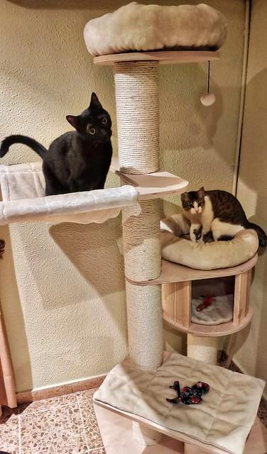 Alfred, gatito blanquipardo de ojos verdes nacido en Junio´18, en adopción. Valencia. ADOPTADO. 32650782568_ff4e546b35_z
