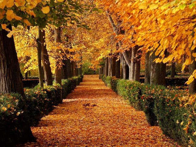 Así se ve un buen otoño en Aranjuez