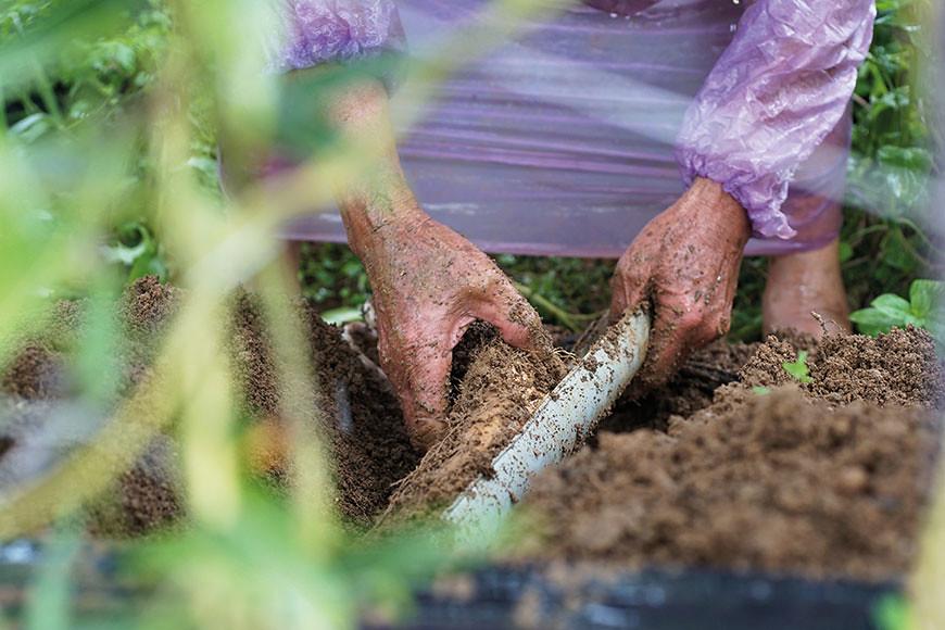 種山藥的工序繁複,要搭棚架讓藤蔓攀爬生長,為了讓山藥生長形狀筆直,必須埋下半圓形的水管,以利生長及採收。