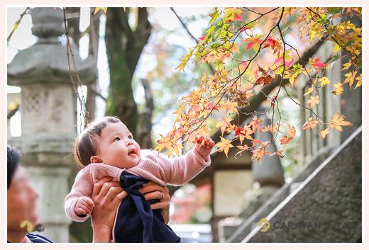 紅葉と赤ちゃん モミジ