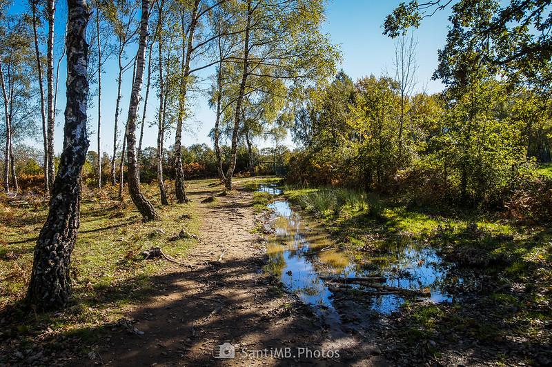 Collet de l'Aire, entre Osona, La Garrotxa y La Selva