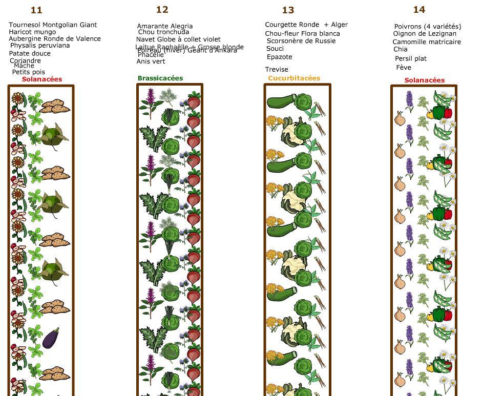 Plan du potager 2019 - Planches 12 à 14