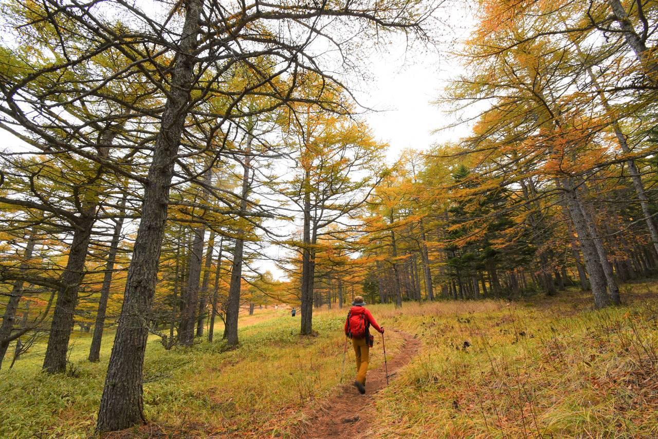 浅間山登山 湯ノ平高原の紅葉