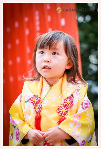 七五三 3歳の女の子 黄色の着物 神社の赤い鳥居