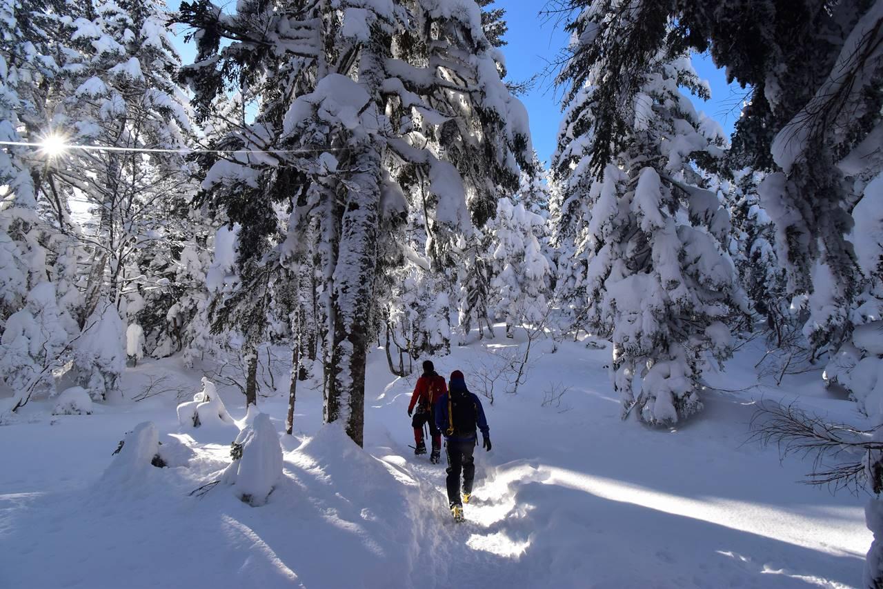 樹氷の西穂高岳の森