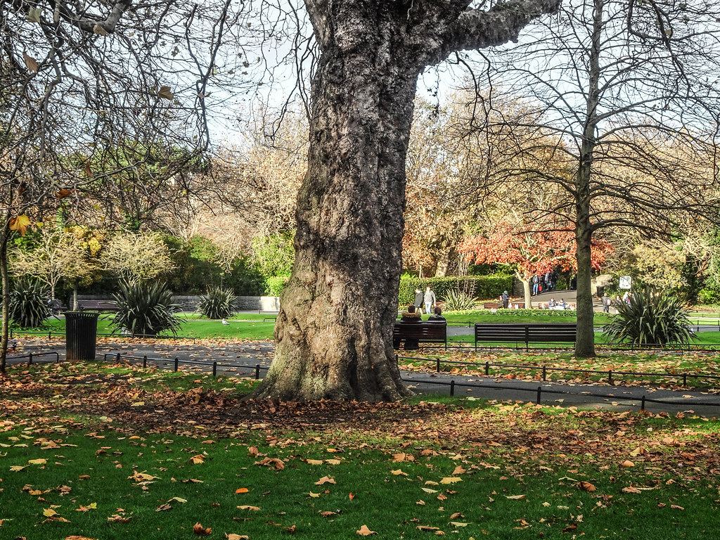 ST. STEPHEN'S GREEN IN AUTUMN 010