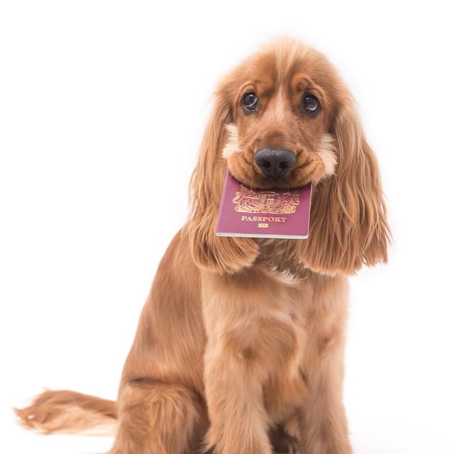 Lemmikkieläimellä tulee olla rokotukset ja dokumentit kunnossa ennen lentoa