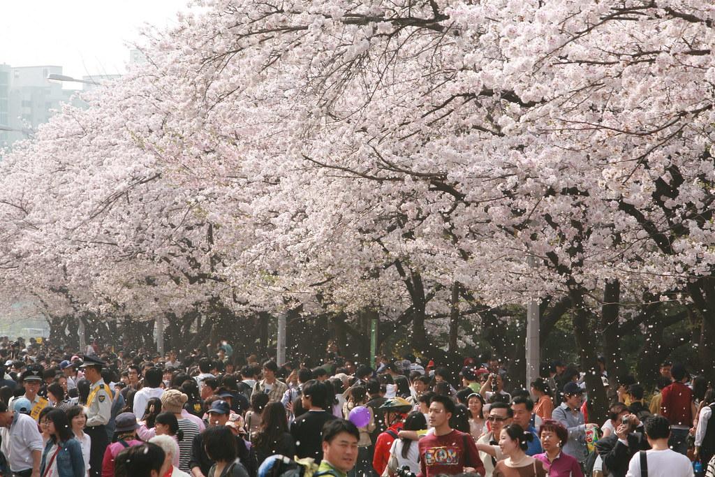 汝矣島公園遊人如織。圖片來源:Republic of Korea(CC BY-SA 2.0)