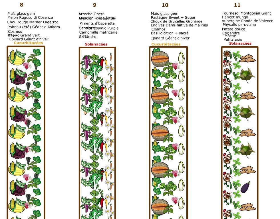 Plan du potager 2019 - Planches 8 à 11