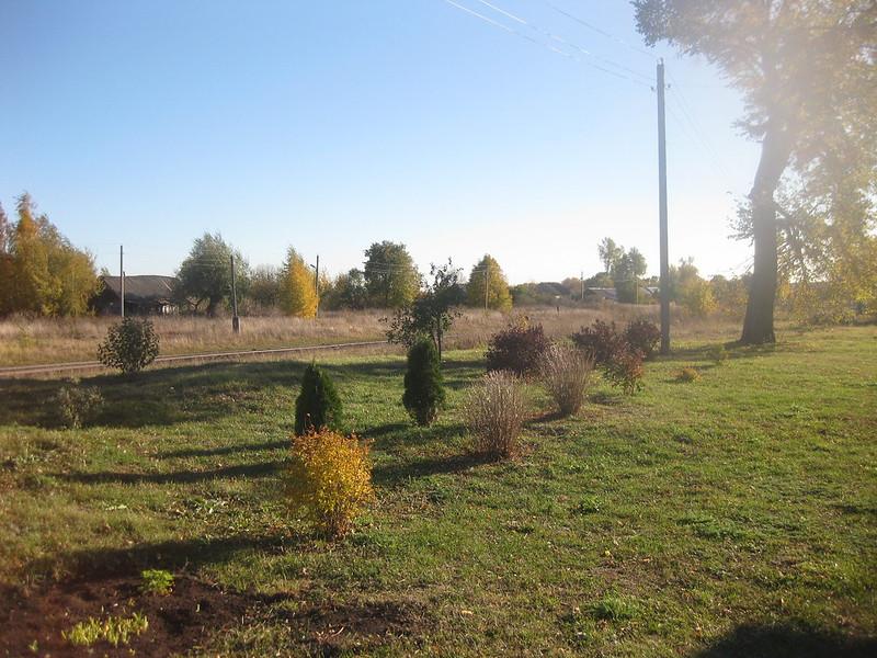 Осенние кусты около дома
