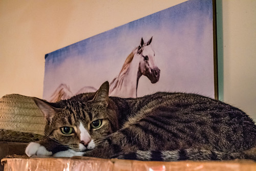 Cat, Horse and Sombrero | by Stephen Downes