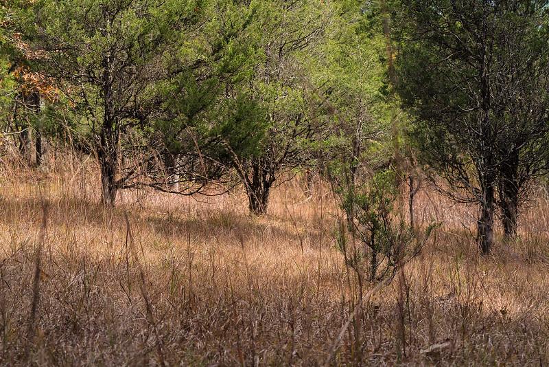 Cedar Glade