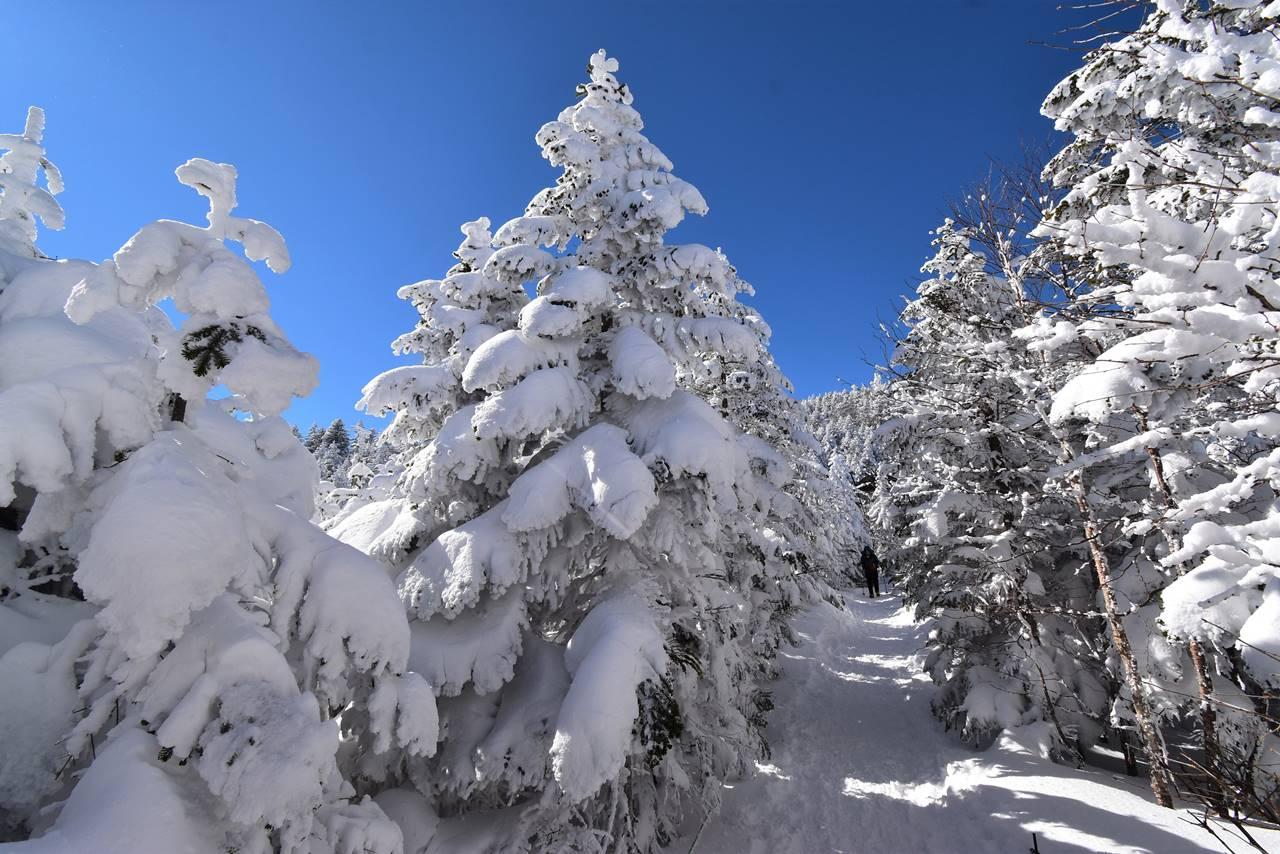 北横岳の樹氷 雪山ハイキング