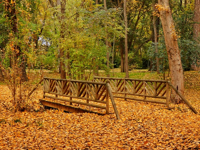 Jardín del Príncipe (Aranjuez en otoño)