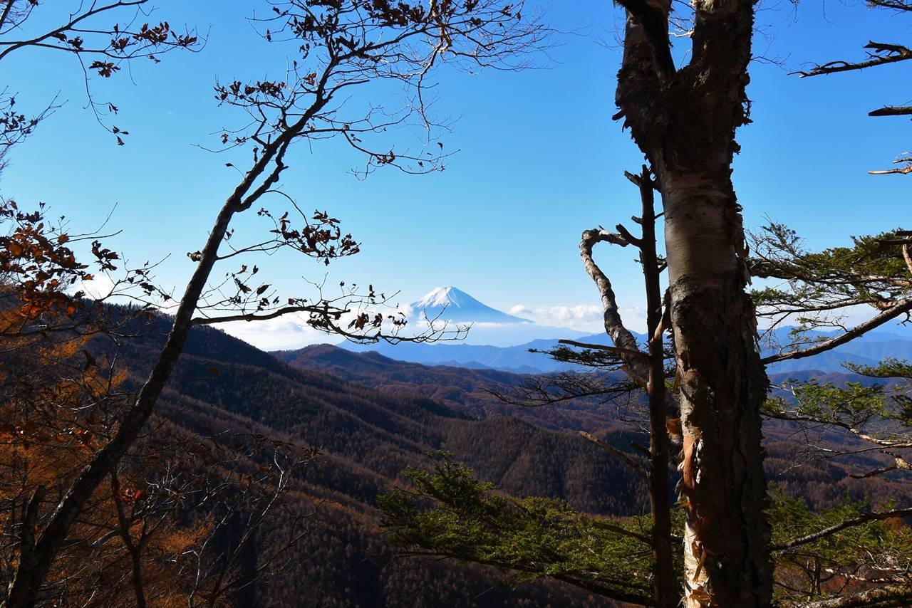 樹々の合間からの富士山