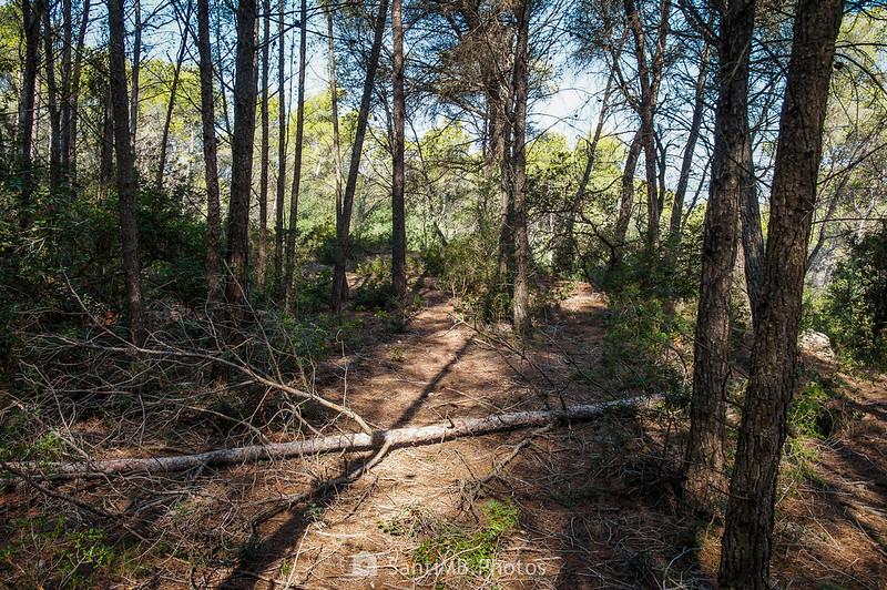 Atajo en el Bosc de Les Comes