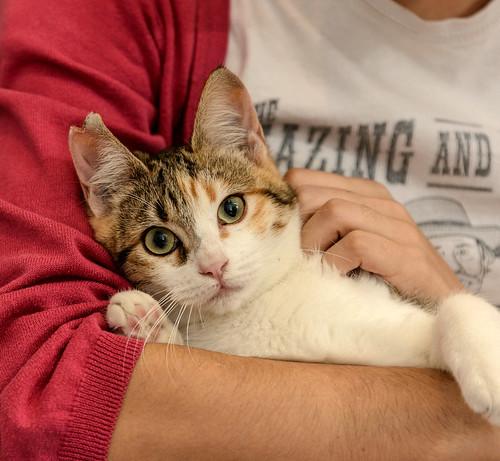 Casandra, gatita tricolor monísima y súper buena esterilizada, nacida en Mayo´18, en adopción. Valencia. ADOPTADA. 45453305544_68c69b9cc1