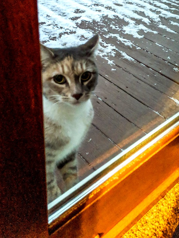 Cat out in the cold.
