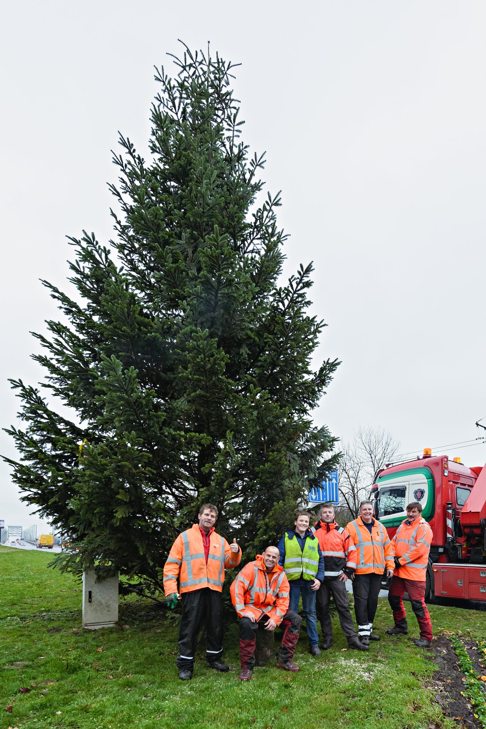 kerstboom bomenploeg gemeente Arnhem