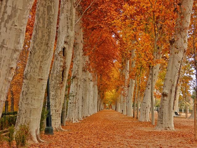 Jardín de la Isla en el Real Sitio de Aranjuez durante el otoño