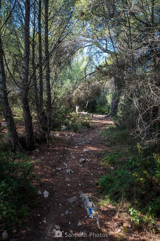 Sendero señalizado de azul en el bosque de Les Comes