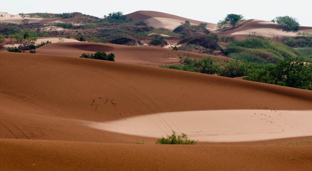 梅模沙丘(圖片提供:Lee Fitzgerald)