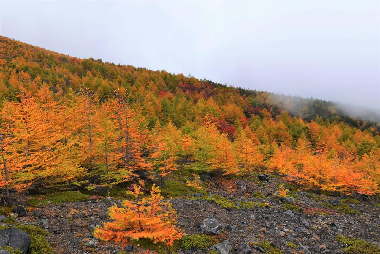 浅間山の紅葉