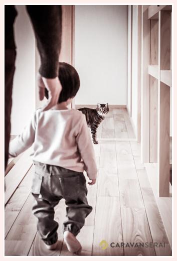 1才の女の子と飼い猫