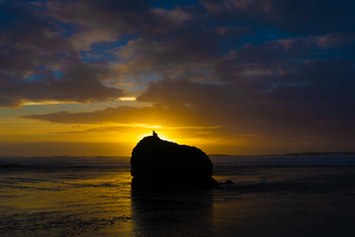 Bird at Bandon Sunset | by tryggphoto