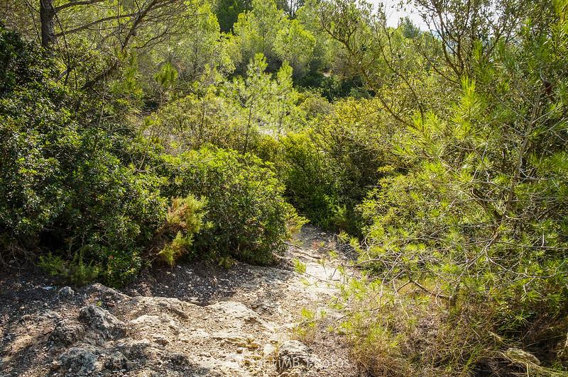 Bosc de La Muga