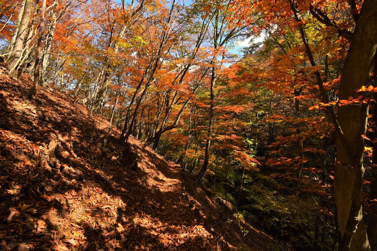 秋の大マテイ山 日帰り紅葉登山