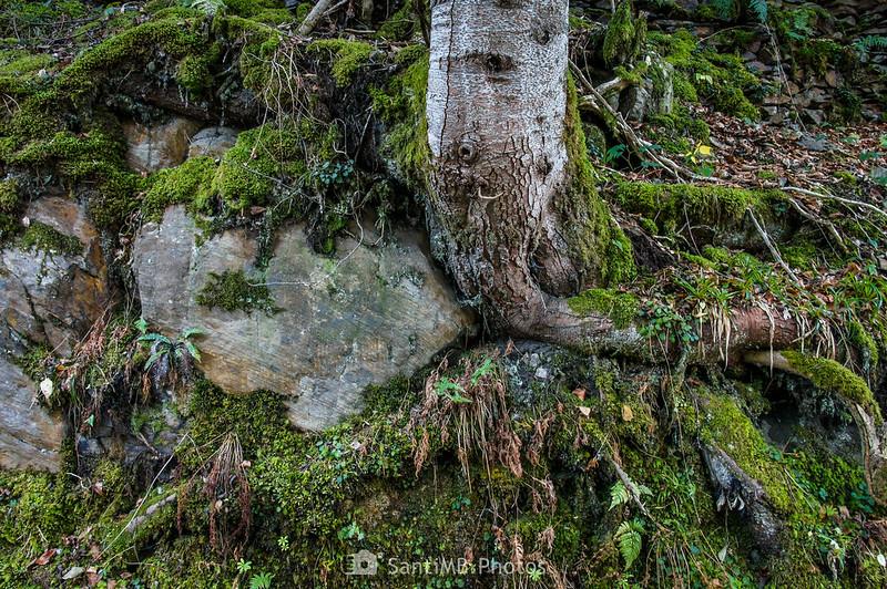Árbol en la Val de Toran