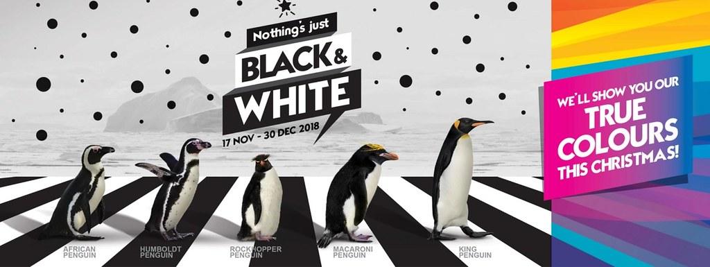 Holiday fun at the Singapore Zoo, Jurong Bird Park and River Safari - Alvinology