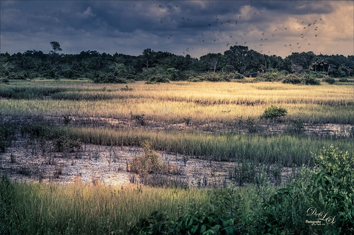 Image of backwater in St. Augustine, Florida