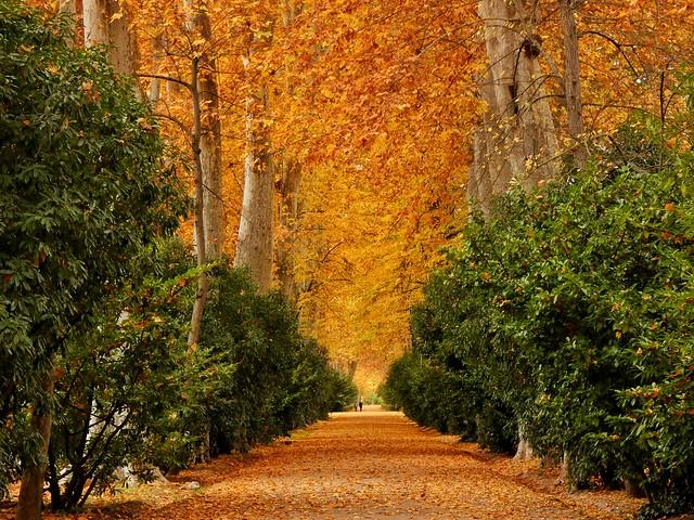 Jardín del Príncipe en Aranjuez durante el otoño