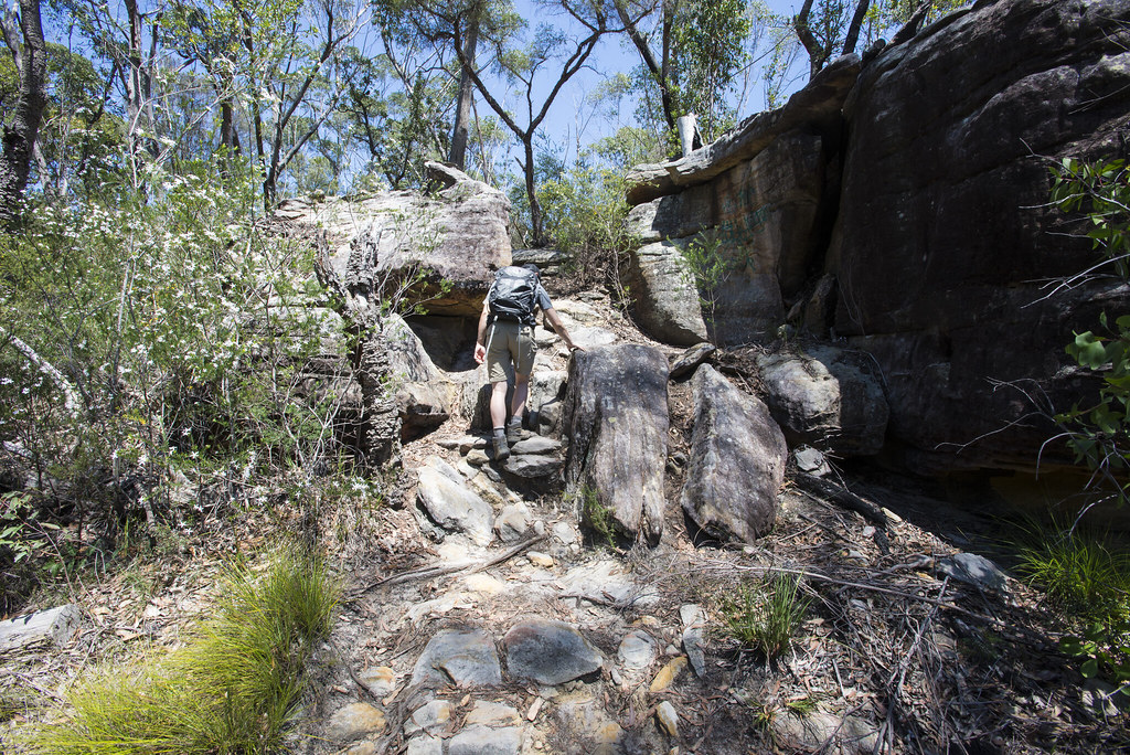 Blue gum walk between rocks