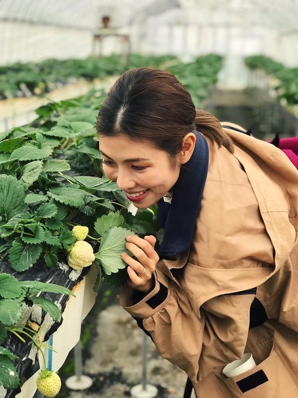 White strawberry picking