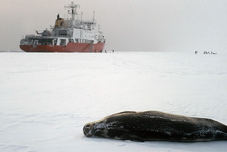 seal on ice with ship in distance