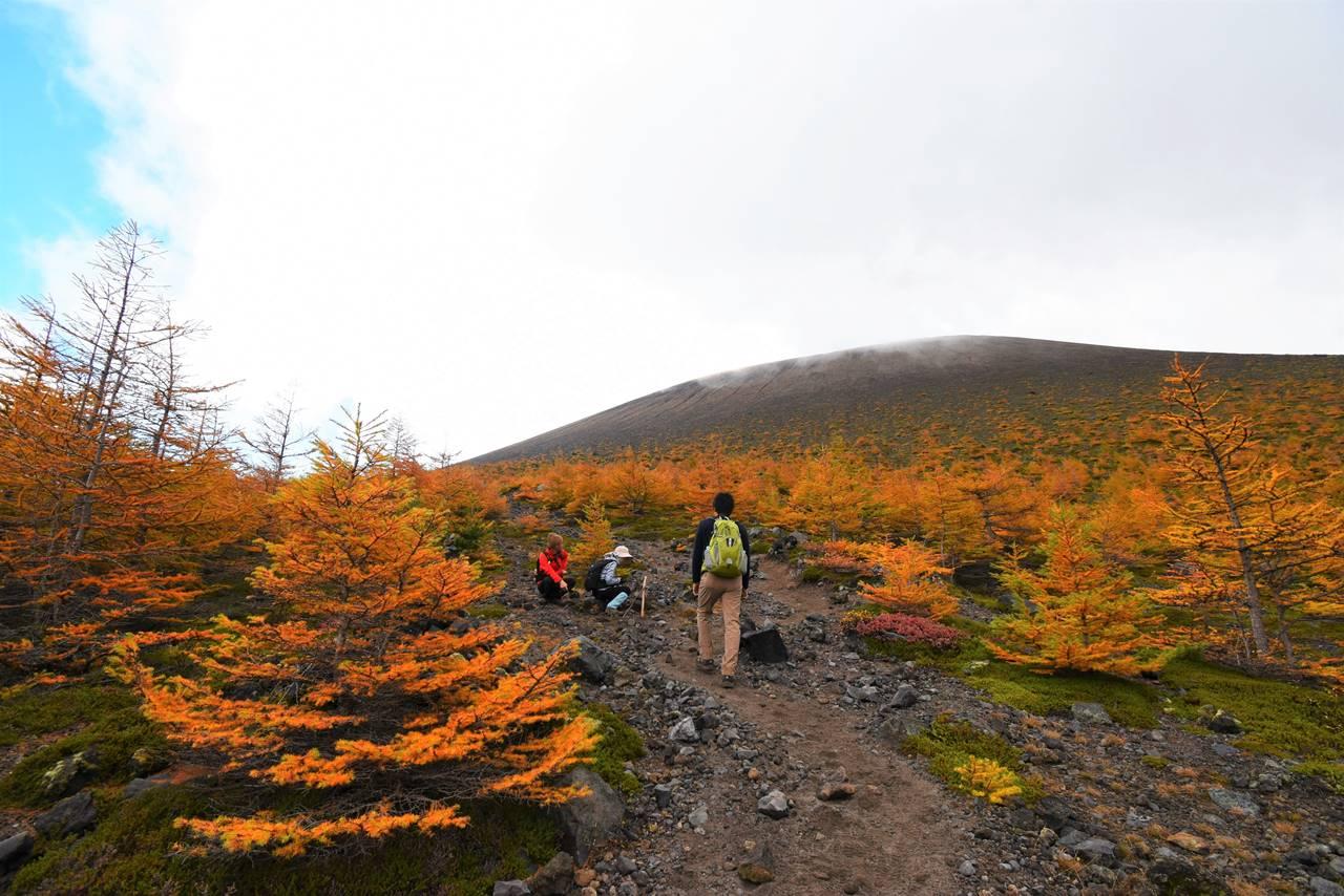 浅間山(前掛山)とカラマツの紅葉