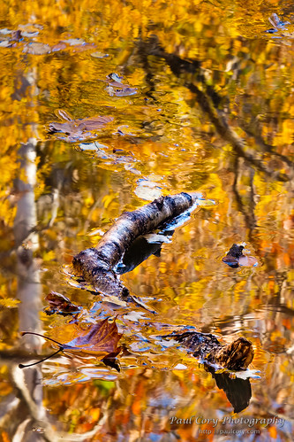 Snaking Through the Fall Reflections | by Paul Cory