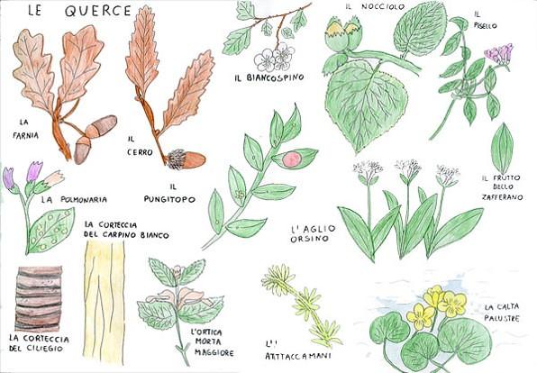 tavola dei vegetali a colori