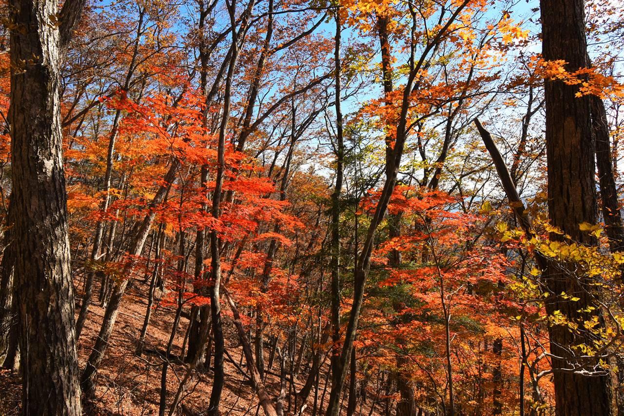 牛ノ寝通りの紅葉風景