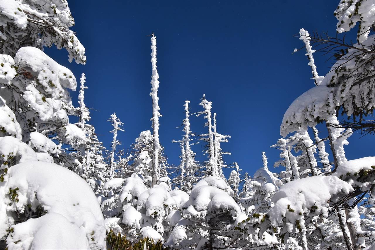 北横岳 雪の枯れ木