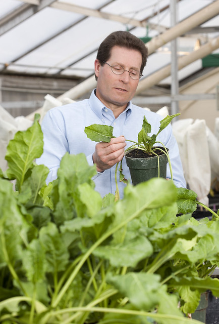 A person working in a greenhouse